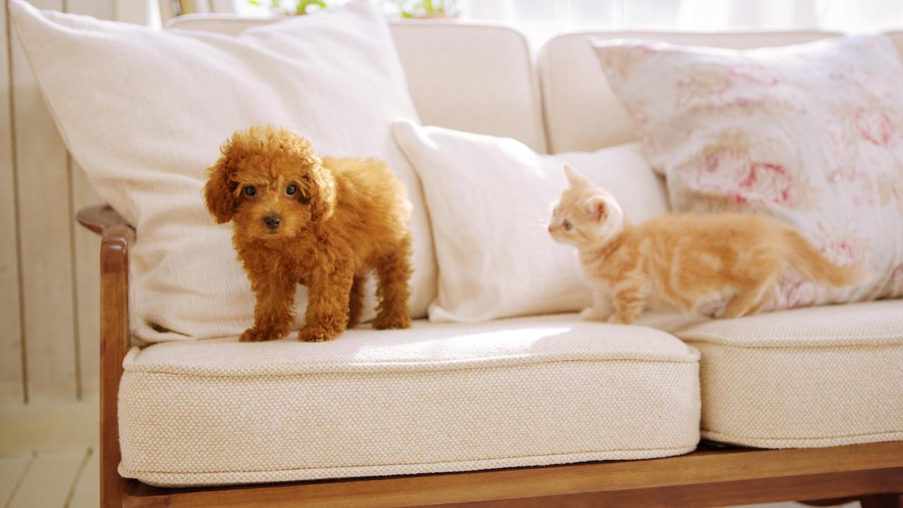 Nintendogs And Cats Review Header