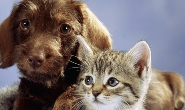 cats-and-dogs-pets-at-play-review