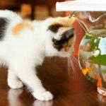 nintendogs-cats-banner