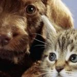 cats-and-dogs-pets-at-play-banner